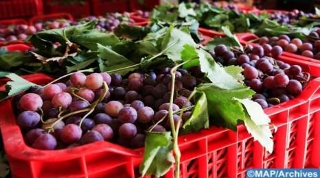 إنتاج العنب بدكالة.. رافعة أساسية للتنمية القروية